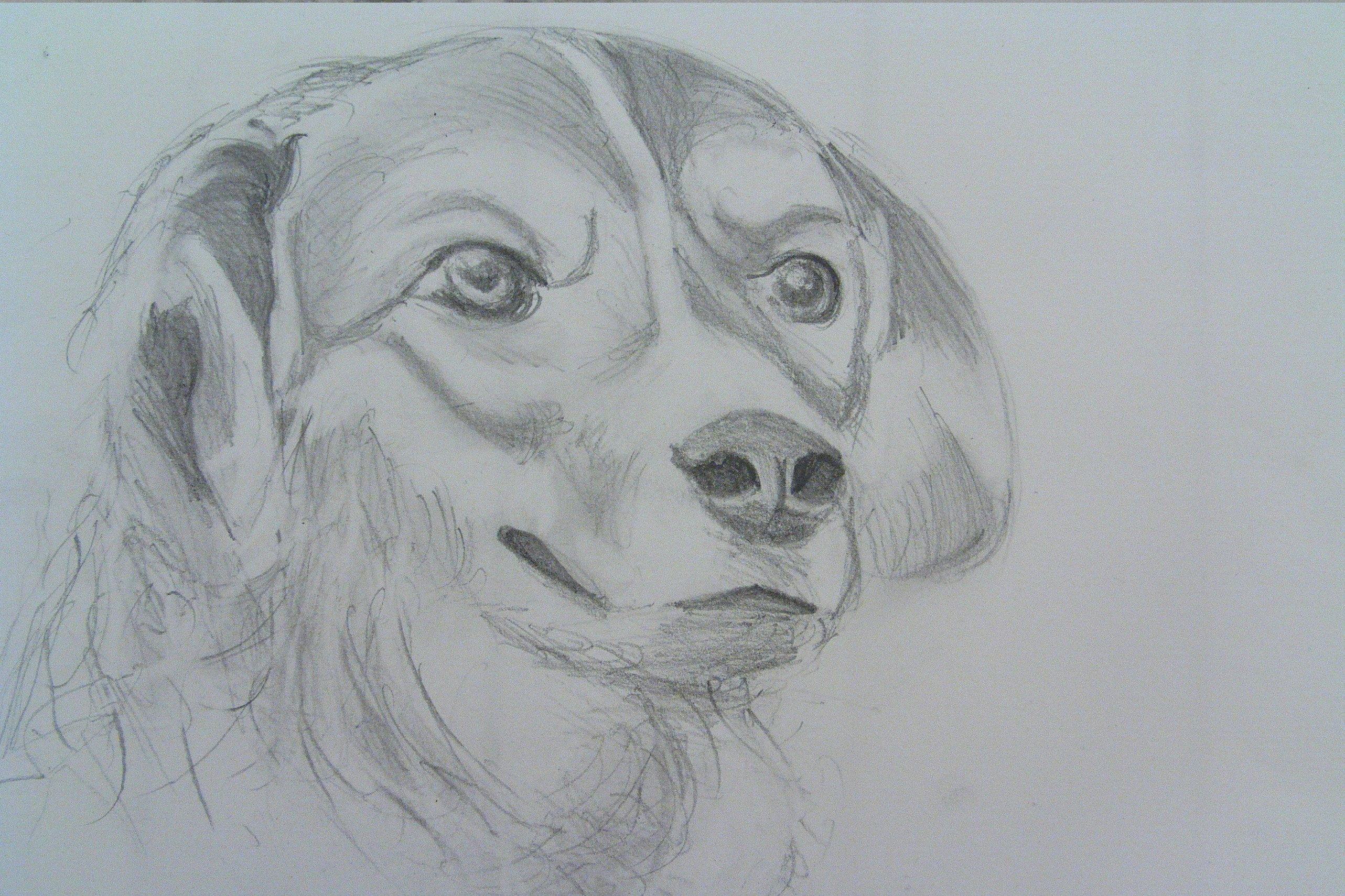The gallery for really good drawings of dogs for Good sketches to draw