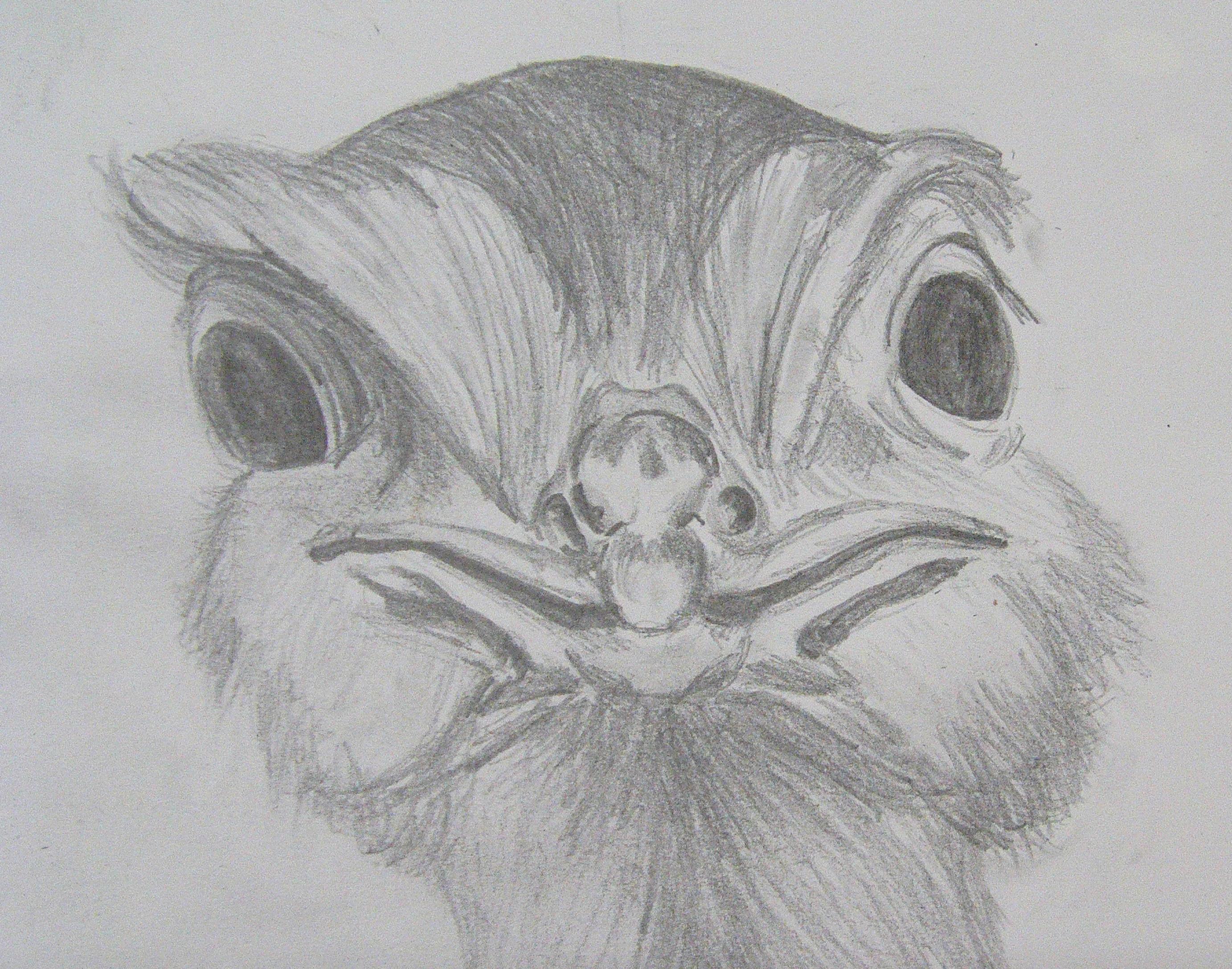 drawings of birds richard north